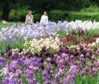Feeria barw w Ogrodzie Botanicznym UMCS