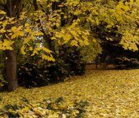 Od 1 listopada 2014 r. Ogród Botaniczny UMCS jest...