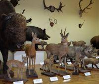 """Pracownia """"Muzeum Zoologiczne"""" - wznowienie..."""