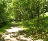 Ogród Botaniczny UMCS zaprasza