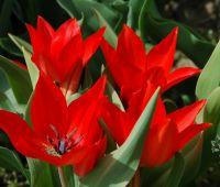 Kwiecień (II połowa)