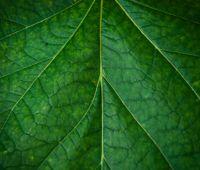 """20-23 września: Konferencja """"Roślina – źródłem..."""