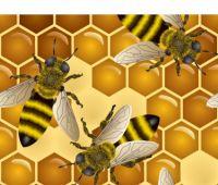 Naukowcy z UMCS opracowali lek dla pszczół