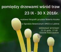 23 września - 30 października: Wystawa fotografii grzybów...