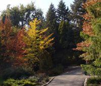 10 października: Dzień Drzewa