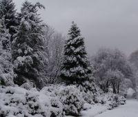 2 grudnia: Zima w Ogrodzie Botanicznym UMCS