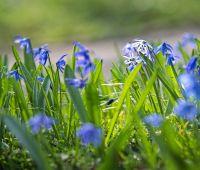 Poszukiwanie wiosny w Ogrodzie Botanicznym