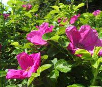 2 lipca: Niedzielny spacer z przewodnikiem po Ogrodzie...