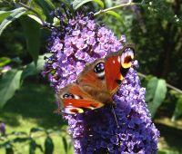 18 maja: Fascination of Plants Day (Dzień Roślin)
