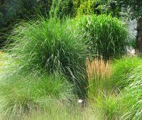 Niedzielny spacer z przewodnikiem po Ogrodzie Botanicznym...