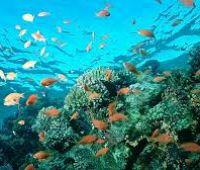 Konkurs BiodivClim: zaproszenie do składania wniosków