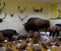 Muzeum Zoologiczne - komunikat