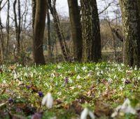 Otwarcie Ogrodu Botanicznego UMCS po zimowej przerwie -...