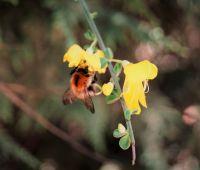 """Konkurs plastyczny """"O świat dbamy - pszczołom..."""