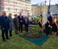 UMCS sadzi dęby w ramach Święta Drzewa - informacja