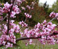 Załóż swój ogród - porady i inspiracje