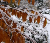 9 listopada: Pierwszy śnieg