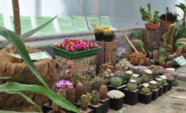 Wystawa kaktusów i innych sukulentów (2014)
