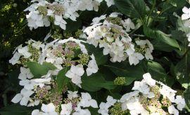 Ogród Botaniczny - lipiec -
