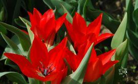 Ogród Botaniczny - kwiecień (II połowa) -