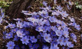 Ogród Botaniczny - kwiecień (I połowa) -