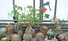 Wystawa kaktusów i innych sukulentów - 2015