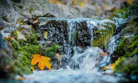 """Wyniki Konkursu Fotograficznego """"Focus na Botanik"""" - 2015"""