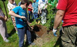 9 maja: Sadzenie drzewa przez uczniów SP w Konopnicy