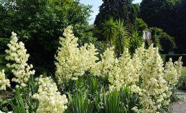 """""""Botaniczna Piątka"""" - bieg w Ogrodzie..."""