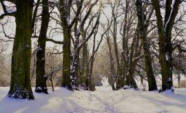 Zima w Ogrodzie