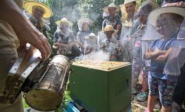 Święto Pszczół w Ogrodzie Botanicznym
