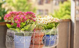 Przyniesione kwiaty znoszą opłaty!