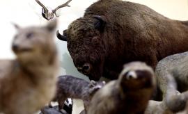 75 lat Muzeum Zoologicznego