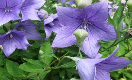 Ogród Botaniczny - Dział Roślin Górskich (Alpinarium)