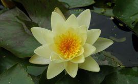 Ogród Botaniczny - Dział Roślin Wodnych i Bagiennych