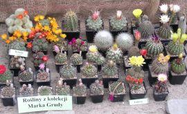 Wystawa kaktusów i innych sukulentów (2009)