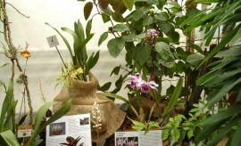 Wystawa storczyków (2008)