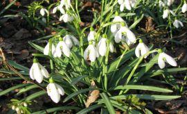 Wiosna w Ogrodzie Botanicznym UMCS