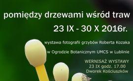 Wystawa fotografii grzybów Roberta Kozaka