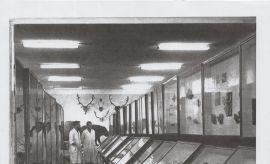 Historyczne zdjęcia Muzeum Zoologicznego