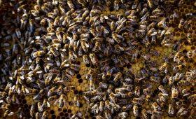 Spotkanie z naukowcami i pasjonatami pszczół  w CSK.