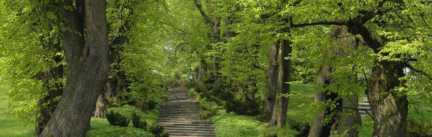 Witamy na stronie Ogrodu Botanicznego!