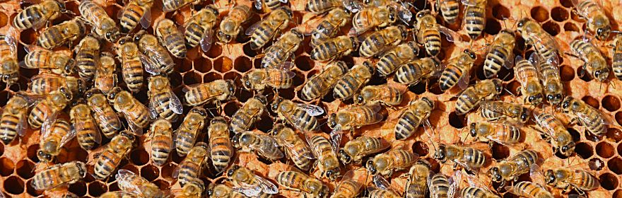 Pszczoły i dzikie zapylacze