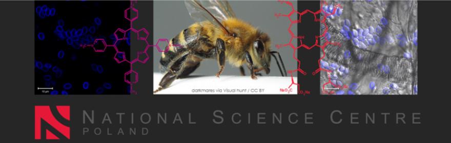 """""""Aktywność biologiczna i mechanizmy działania związków porfirynoidowych przeciwko wewnątrzkomórkowym patogenom pszczelim z rodzaju Nosema"""