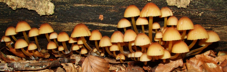 Kolekcja Mykologiczna