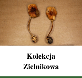 Kolekcja Zielnikowa