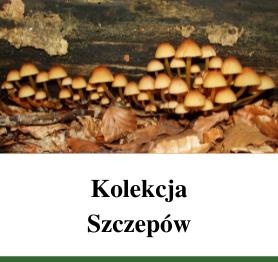 Kolekcja Szczepów