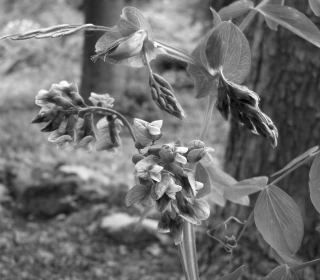 Ogród Botaniczny - Dział Flory Polski -