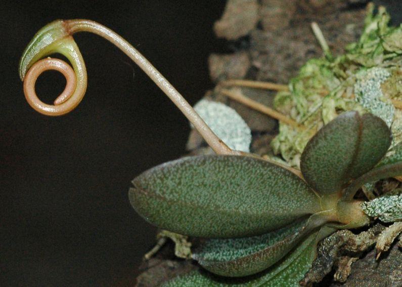 Ogród Botaniczny - Dział Roślin Tropikalnych i...