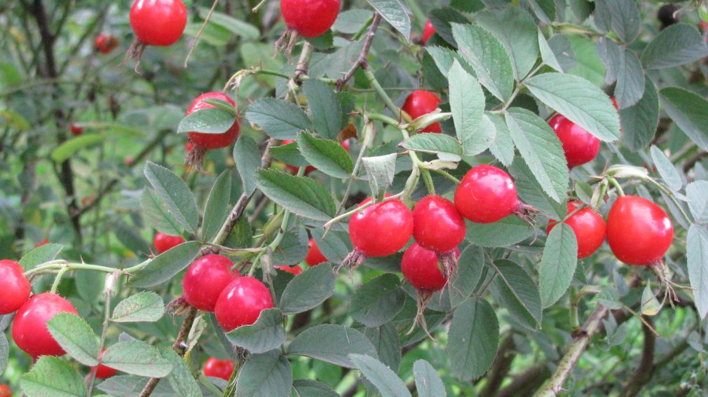 Ogród Botaniczny - wrzesień -